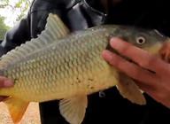 《戶外野釣視頻》大水面野釣,在蘆葦邊打窩,連續碰到大魚!