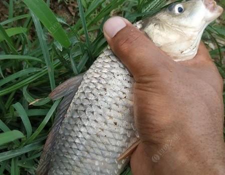 野钓鲤鱼,心情有点小激动。