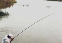 野河作釣,為何經常時好時壞!