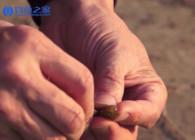 《钓鱼百科》第174集 什么是面包虫?