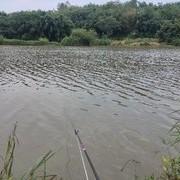 如何成為河冠?淺談江河做釣鯽魚心得