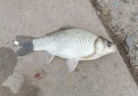 七星漂钓鱼技巧分享