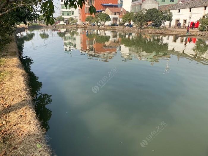 安头村钓鱼场