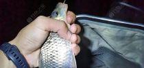 玉米擒鲤记(1):海南鱼种千万,唯独钟爱鲫鲤