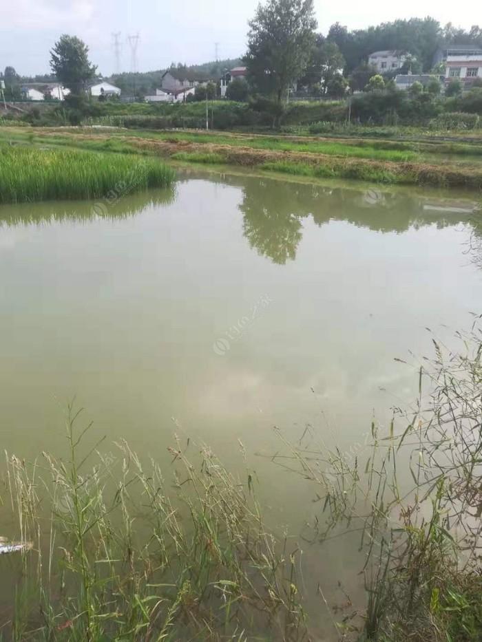 龙虾养殖塘
