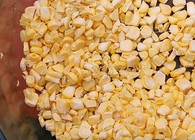 《麥子釣魚》又到鮮玉米神餌季,打窩和水層的注意點還有這么多講究