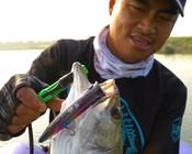 《蓝旗鱼路亚》 螃蟹秦围河跳海鲈,什么路亚钓的鱼更大?