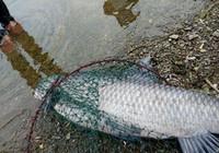 春末野釣草魚,這些技巧不能少!