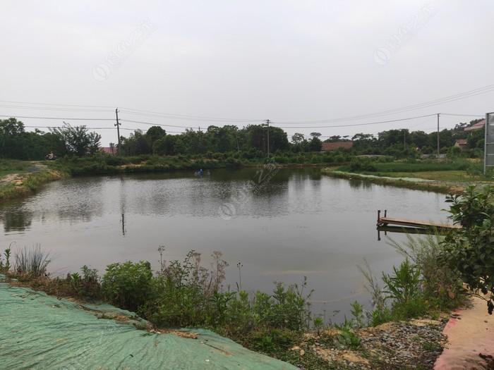 白鹤山老杨钓鱼池