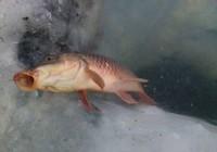 冬季钓鲤鱼三准则