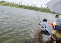炎熱天氣作釣鯽魚,這幾招少不了!