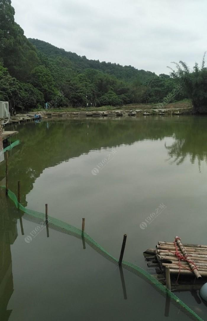 龙阳钓鱼场