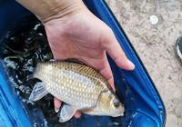 夏季作釣必須掌握的時間選擇!