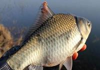 鱼儿在窝边翻,却没有口是什么原因?