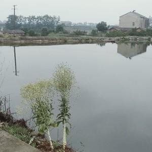 刘师傅钓鱼场天气预报