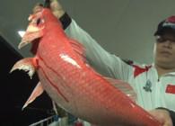 《筏钓江湖》第三季第50期:征战西沙群岛 力搏深海巨兽