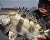 《EWE路亚》大江里的野生鳜鱼怎么钓?找对标点很重要!