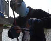 《蓝旗鱼路亚》鱼藏桥墩边,测试软尾VIB能不能把鱼钓出来?