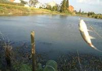 淺談風向對於作釣的影響~
