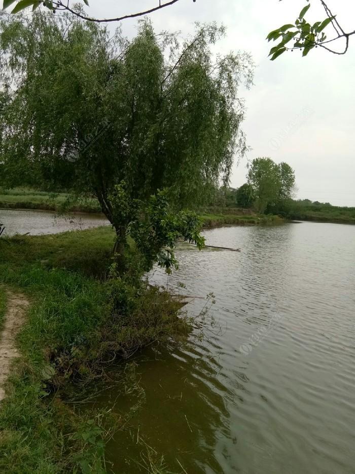 弘叶绿色渔场