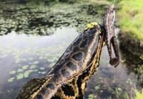 資深路亞釣手詳談雷蛙的選擇!