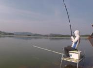 《白条游钓》白条游钓牌楼水库 玉米钓行程效果显著 截口顶漂上大货!