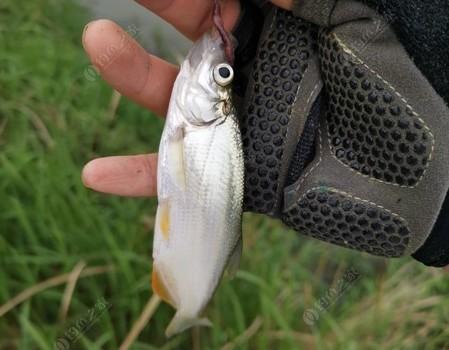 野塘探釣系列:一場秋雨一場寒,一竿一線提大板