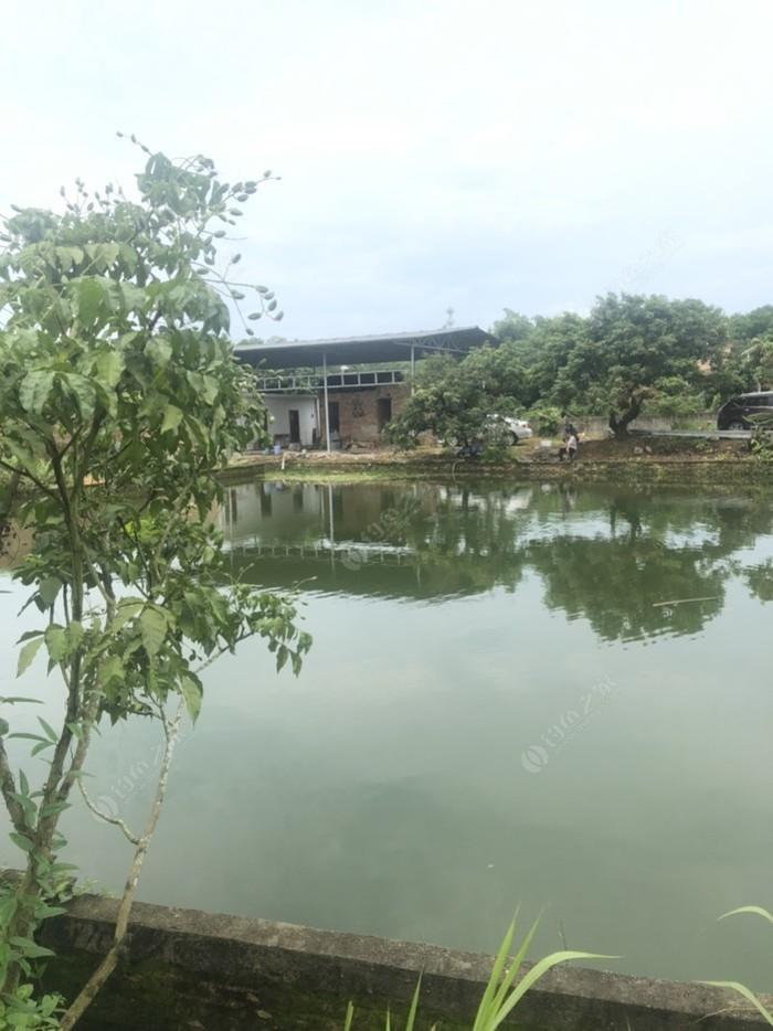 欢乐园廋身鱼农庄
