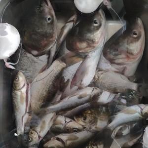 长安纯白水鱼钓场