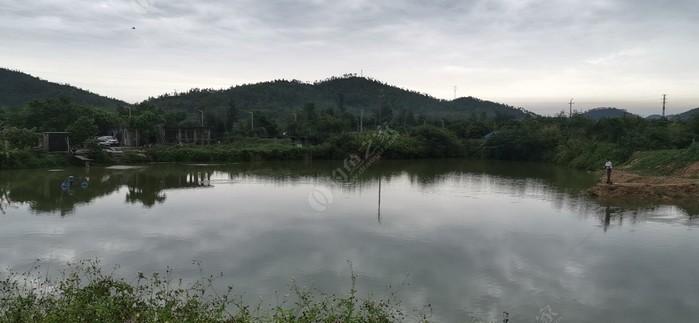 網山村磯釣場