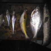 最近在武漢長江釣魚心得