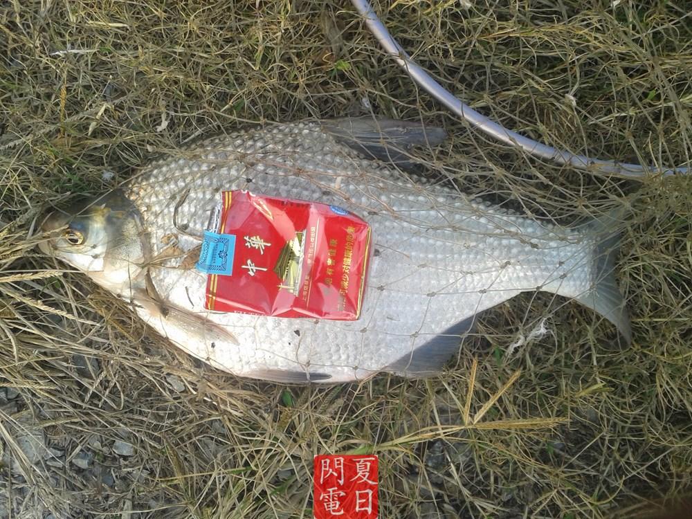 秋季晴天钓河边 收货获青鱼及鳊鱼 惊遇竹篙钓鱼人