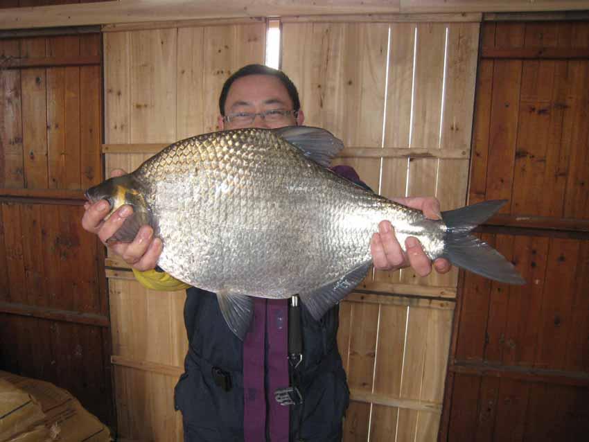 初春千岛湖擒获18斤7两的翘嘴,将近8斤的巨型鳊鱼!