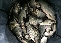 立冬爽釣自留地大板鯽魚頻上鉤