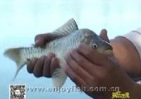 《鱼乐无限》2014 第45期 去春盛达试标(六)