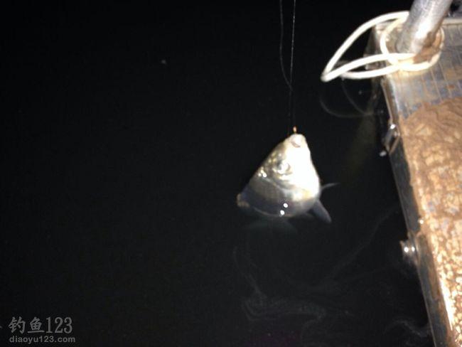 寒冬夜钓独自一人鱼获多多