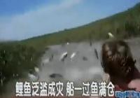 《垂钓对象鱼视频》野生鲤鱼泛滥成灾不用钓鱼就满舱的视频