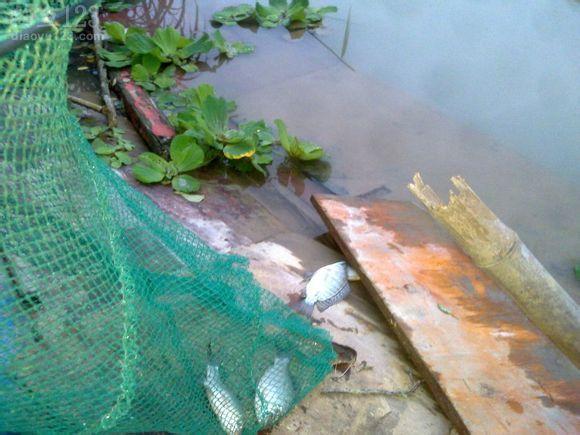 钓鱼之人在娱不在鱼野外钓鱼鱼获