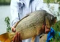 《钓鱼视频》援美猎鲤行 第6集