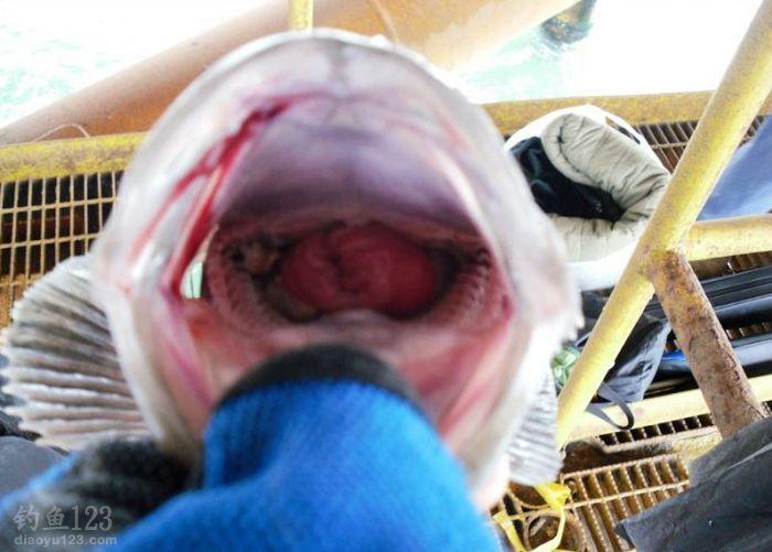 與友深海釣鯛類魚