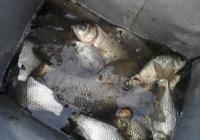 冬季野塘钓鱼爆连钓到手抽筋