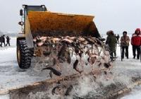 哈尔滨冬捕冰钓旅游节开铲车捞万斤鱼获