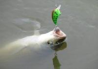 如何选择一款好的路亚鱼线