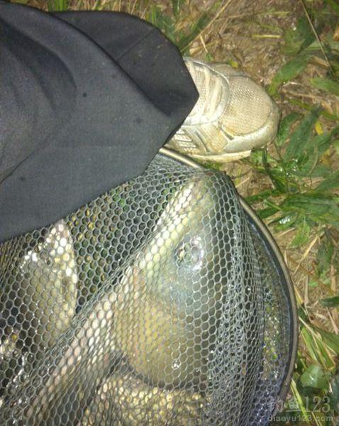 夜钓大草鱼