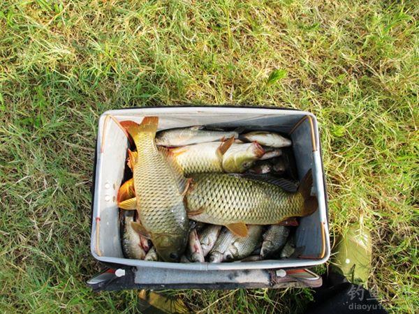 燕山水库最后渔获