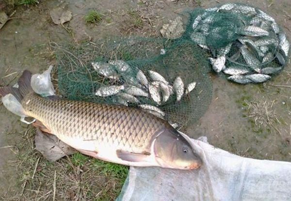 夏季夜钓野钓钓鲤鱼的技巧