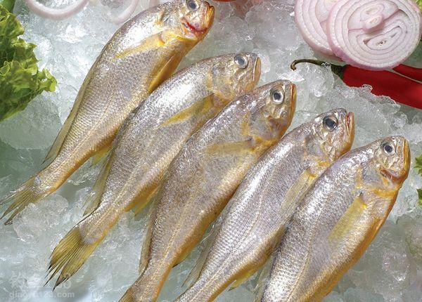 海钓黄花鱼的各种技巧