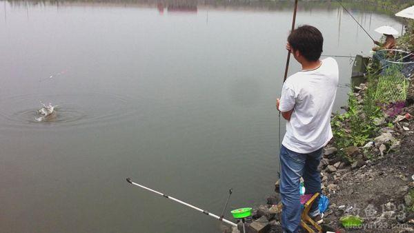 水库钓草鱼