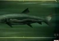 《河中巨怪》第五季 第2集 深水吸血鬼