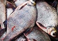 钓鳊鱼的几种具体钓法